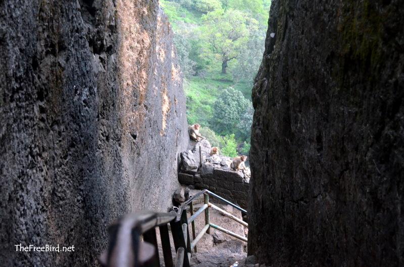 Brahmagiri Trek Monkeys