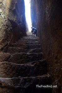 Bhandardurg trek rock cut stairs nashik
