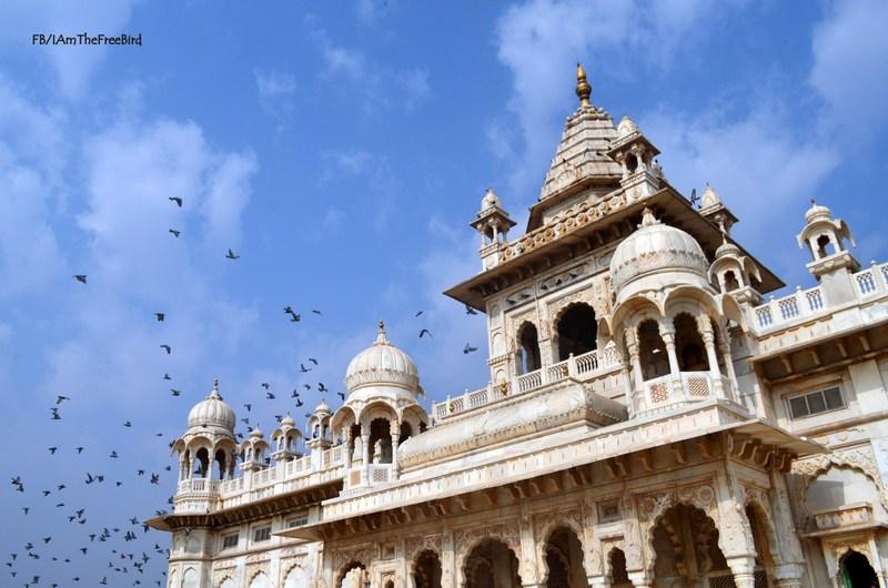 Jaswant thada, JOdhpur Rajasthan The free bird