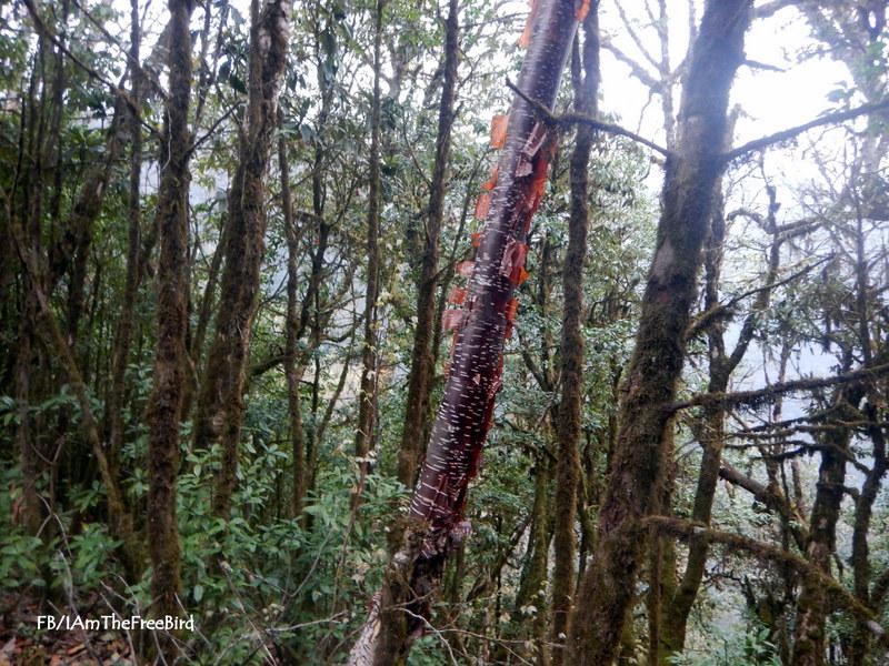 The paper tree NIMAS BMC